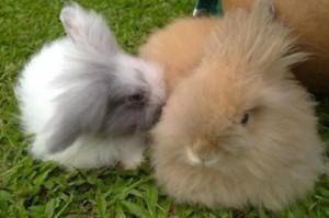 rabbit-16